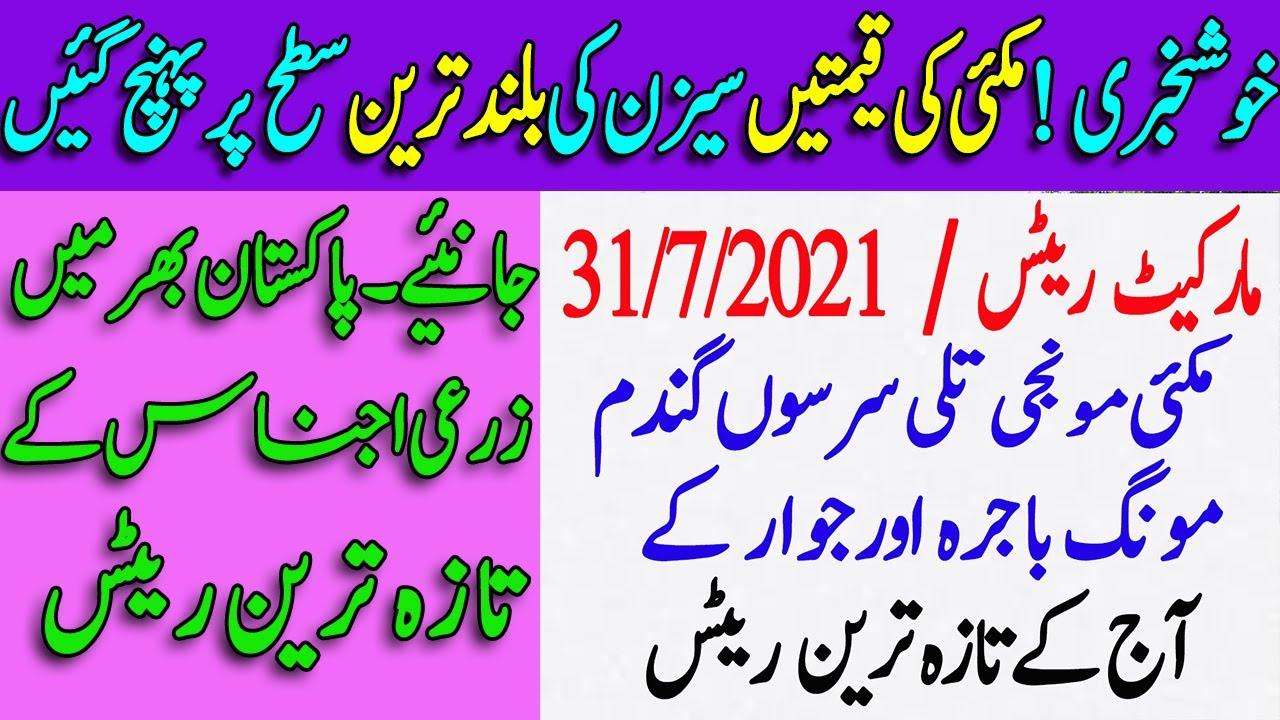 Today maize paddy and wheat prices in galla mandi 2021 | latest updates grain market pakistan #2