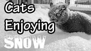 Awesome cats enjoying the snow