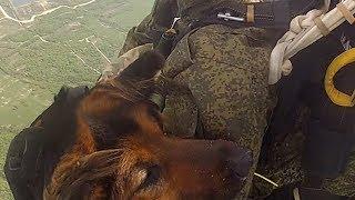 Кинолог и овчарка совершили прыжок с парашютом в Новороссийске