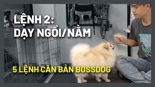 Cách huấn luyện chó cơ bản (#2) Dạy chó NGỒI, NẰM, ĐỨNG chuẩn | Hướng dẫn cнi tiết dễ làm | BossDog