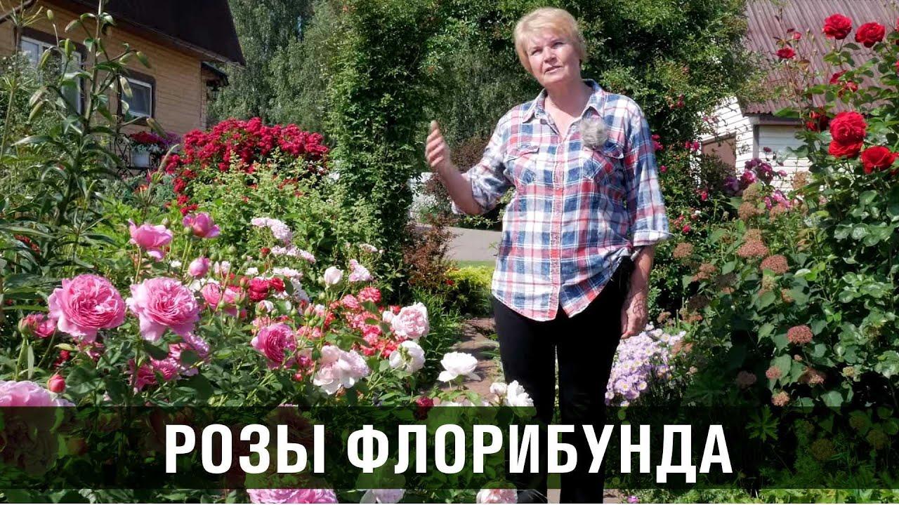 Роза флорибунда. Сорта и особенности роз флорибунда.