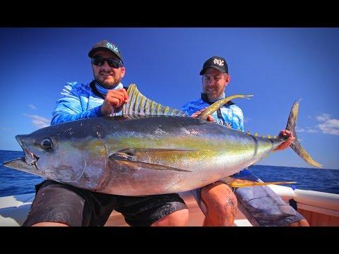 FINDING NEW GROUND - Yellowfin Tuna