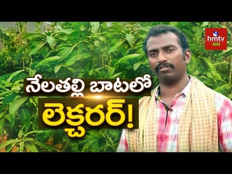 Lecturer Turns Into A Successful Farmer | Natural Farming | hmtv Agri