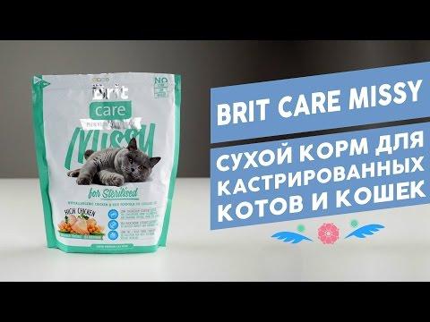 Можно ли кошке давать молоко