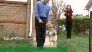 Bark Busters Canada: Your Home Dog Training Experts