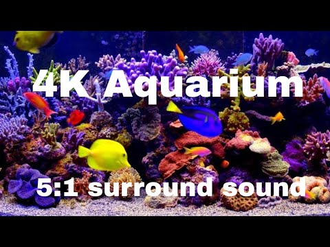 Uscenes Coral Garden 51 surround sound for all s 4K or F
