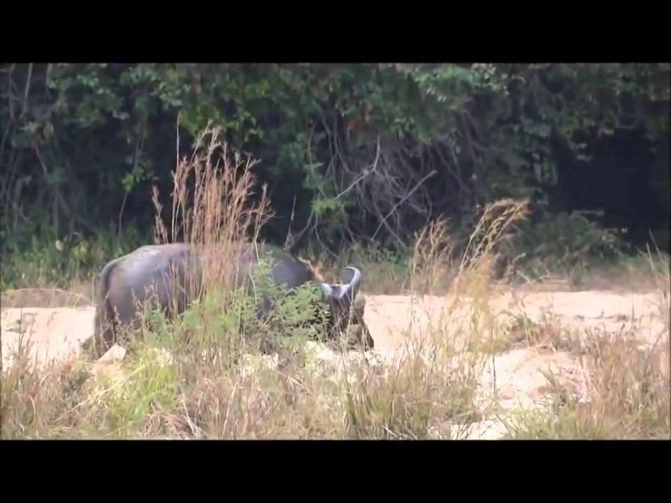 krasivo-ohota-na-safari-video-prozrachnih-trusikah
