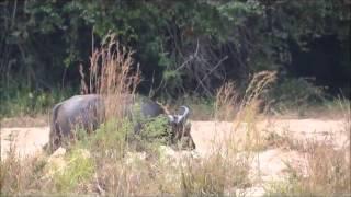 ОХОТА на СЛОНА Safari Hunters   Hunting Elephant in Tanzania