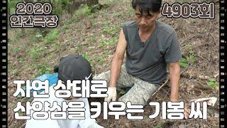 [기봉 씨 삼밭에 살으리랏다] (1/5) [인간극장] 20201005