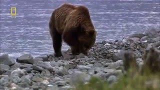 Дикая природа России Сибирь HD