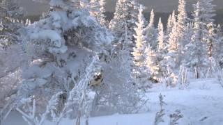 Путешествие на снегоходах STELS из Саланги в Приисковый(Представляем Вам фильм о нашем совместном пробеге на снегоходах Stels S800 Росомаха и Stels S600 Викинг по маршруту..., 2016-02-03T14:08:05.000Z)