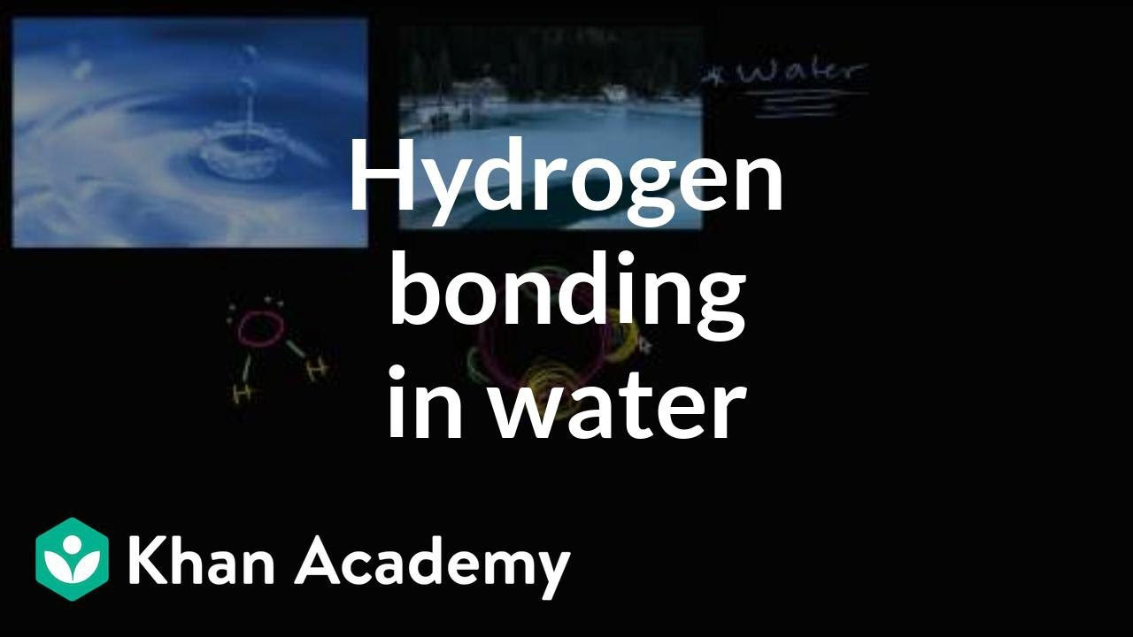 Hydrogen bonding in water (video) | Khan Academy