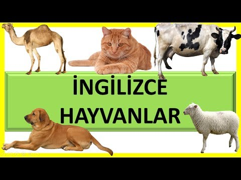 İngilizce Hayvanlar 1 - Learning Animals Name For Kids