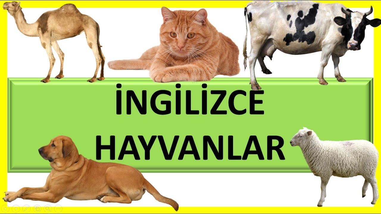 Ingilizce Hayvanlar 1 Learning Animals Name For Kids Youtube