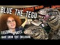 VLOGGING WITH MY TEGU! Featuring Blue's HUGE New GROW TENT ENCLOSURE