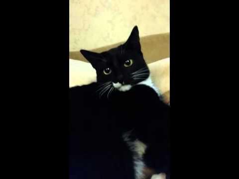 Кота рвет черной
