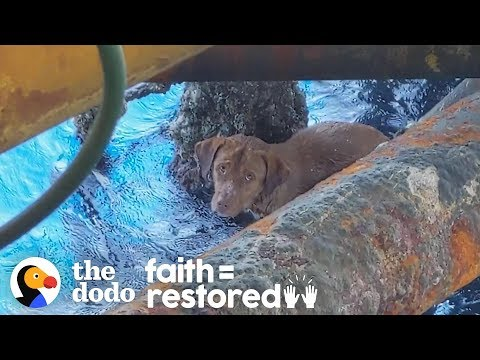 Guy Finds Dog Swimming 135 Miles Offshore and Becomes His Dad | The Dodo Faith = Restored