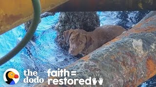 guy-finds-dog-swimming-135-miles-offshore-and-becomes-his-dad-the-dodo-faith-restored