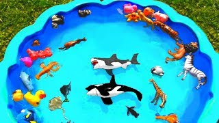 Learn Colors with Wild Animal Names For Kids Pretend Play Outdoor Playground