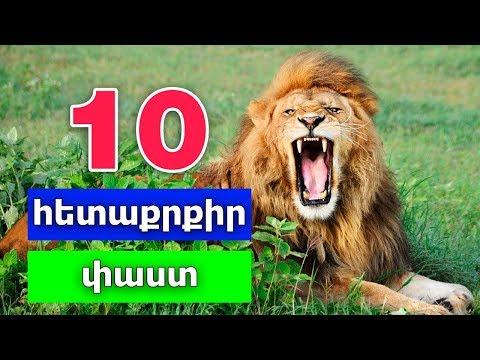 10 հետաքրքիր փաստ առյուծների մասին / 10 Hetaqrqir Past Aryucneri Masin