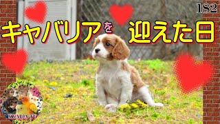 キャバリア・タンちゃん(2013年2月17日生まれ)の成長をまとめました。 ...
