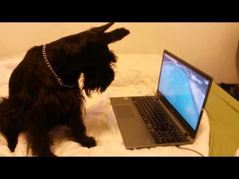 Yuki assistindo a DOGTV
