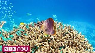 Phát hiện rạn san hô khổng lồ ngoài khơi Brazil | VTC1