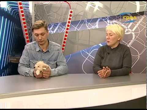 Телерадиокомпания Град: Виктория Козаченко и Денис Демидовский – зоозащитники о своих питомцах