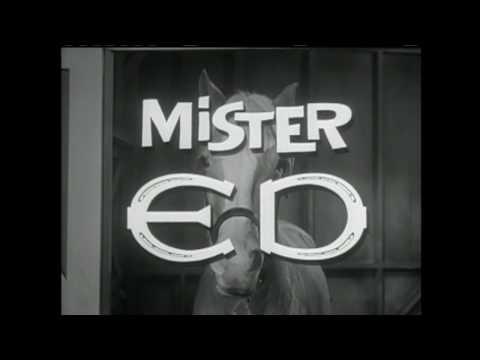 Mr. Ed Theme
