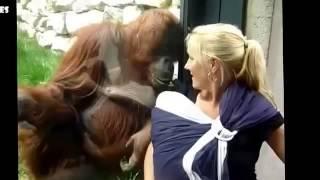 Un bebe orang-outan s