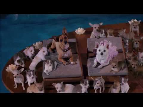 Beverly Hills Chihuahua End Credits (Disney Channel USA Version)