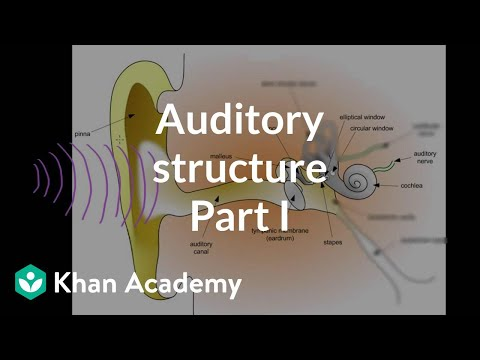 Auditory structure - part 1 | Processing the Environment | MCAT | Khan Academy