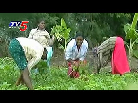 Farmers Yielding Good Profits By Leaf Vegetable Farming | Guntur | Annapurna | TV5 News