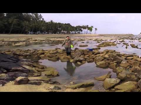 Singapore Reefs: Life on the Intertidal Zone of Sisters