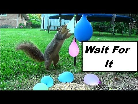 Water Balloons Explode On Squirrel