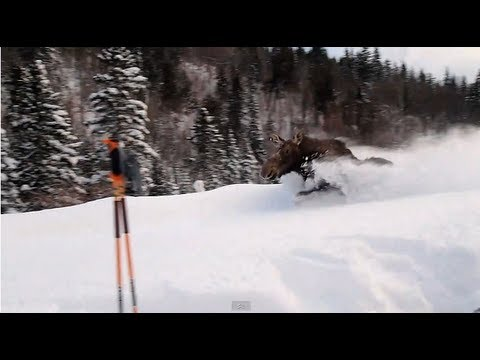Video: Moose Charges at Skiers in Breckenridge | Teton
