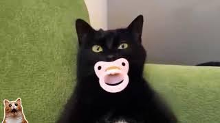 Подборка смешных видео / Приколы с кошками и котами / #onvdul