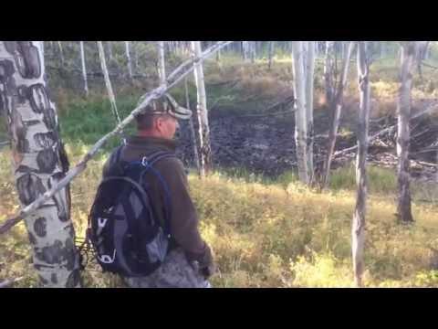 Colorado elk hunt 9/16