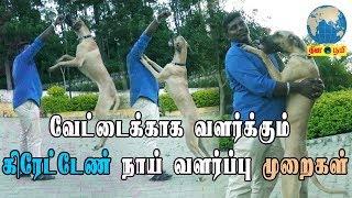Great Dane Dog   வேட்டைக்காக வளர்க்கும் கிரேட்டேண் நாய் வளர்ப்பு முறைகள்   Great Dane Dog in Tamil