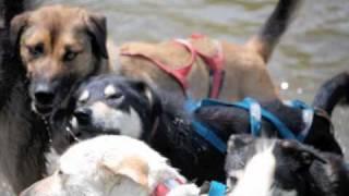 Caleb Learns To Mush At Eden Dog Sledding