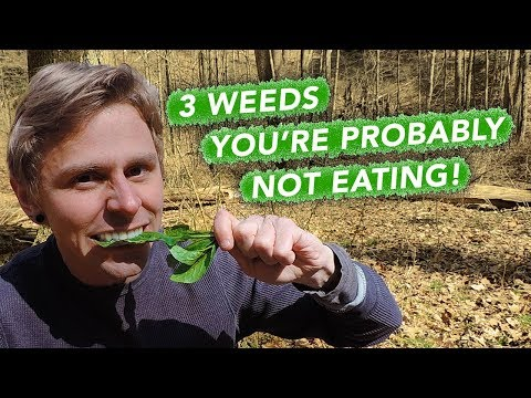 3 Weeds You're Probably Not Eating