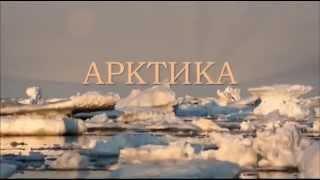 Природа Арктики