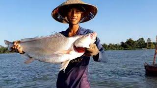 Thả Lưới Sông Tiền Kiếm Tiền Ăn Tết Dính Cá Sủ Khổng Lồ # SĂN BẮT ĐỒNG THÁP #