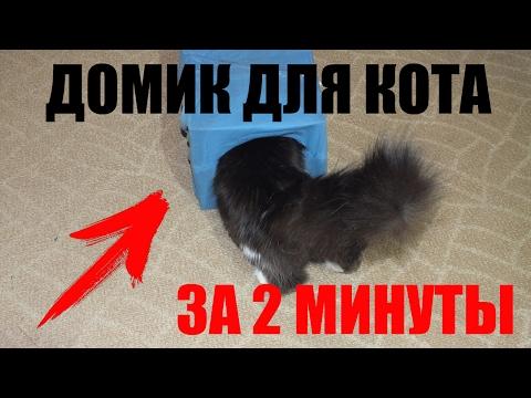 Как сделать домик для кота? Делаем домик для кота своими руками за 2 минуты!