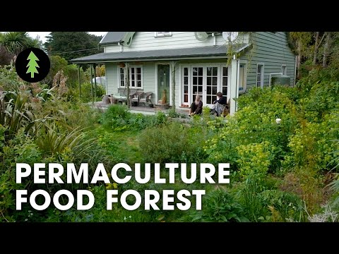 Tour a Thriving 23-Year-Old Permaculture Food Forest - An Invitation for Wildness