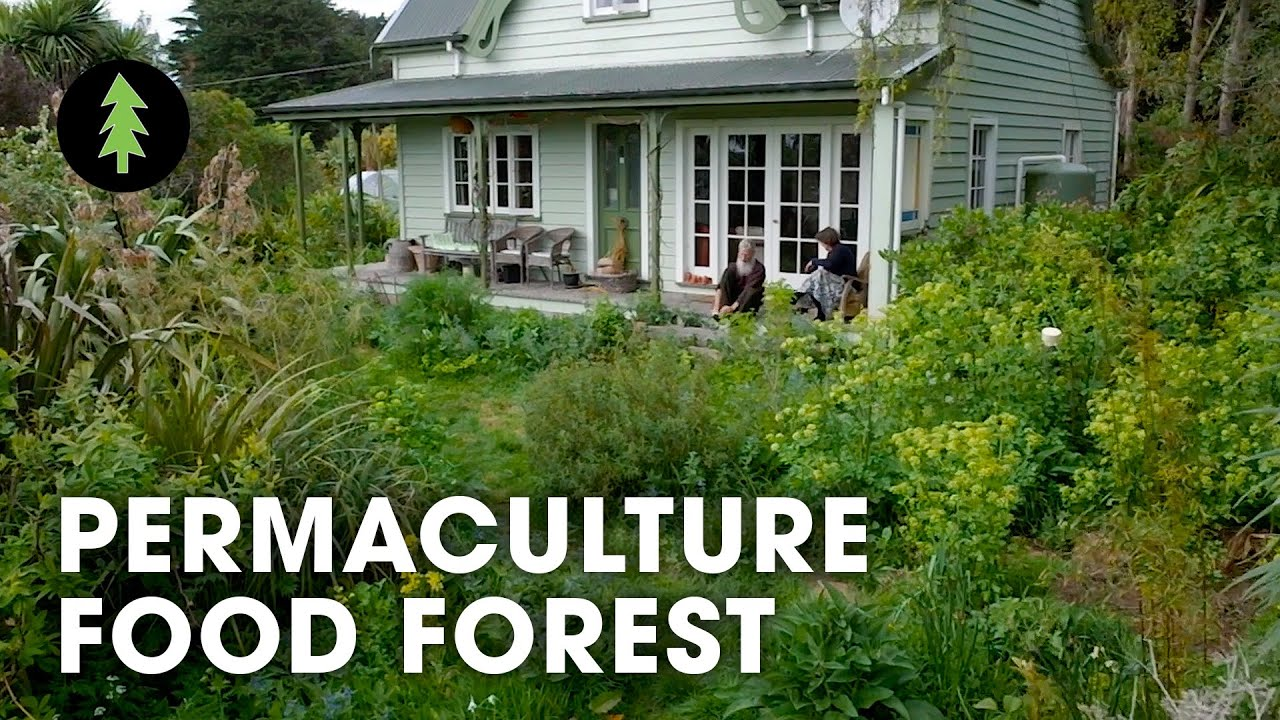Amazing 23-Year-Old Permaculture Food Forest - An Invitation for Wildness