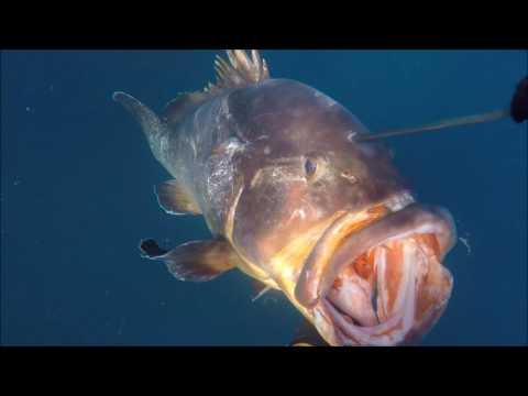 Pesca Submarina Rikisub 2 Meros grandes y un Denton