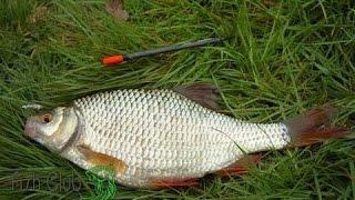 Поплавочная рыбалка, ловля плотвы, уклейки, хорошая рыбалка.