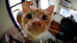 Коты говорят 'Hello' Говорящие коты