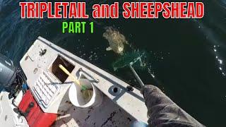 TRIPLETAIL and SHEEPSHEAD part 1